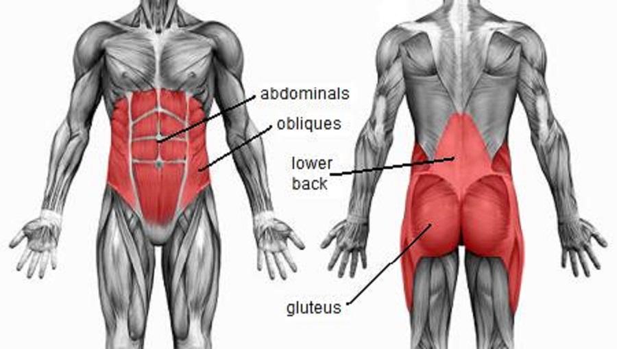 core-muscles II